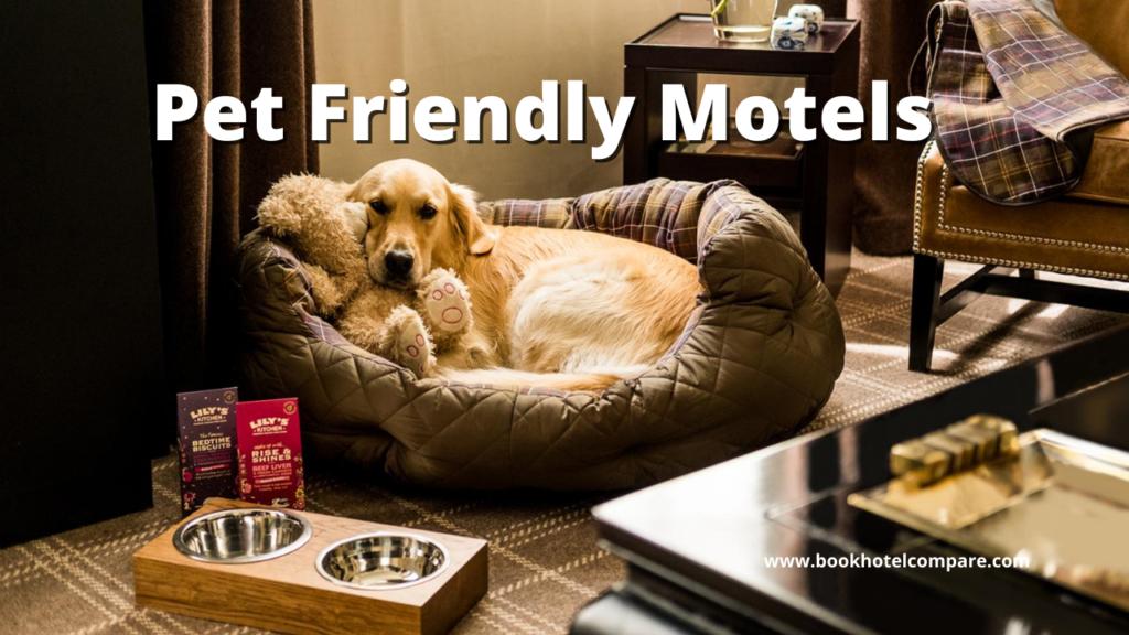 Pet Friendly Motels Near Me